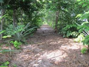 Demonstration Site Trail through Host Trees