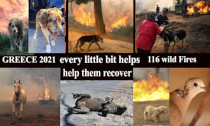 millions of animals need help after the wild fires