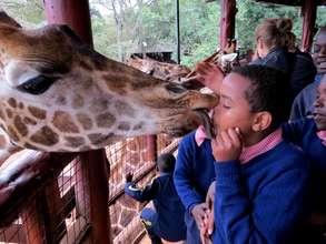 Pupils kissing the giraffes!