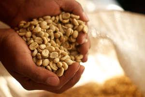 Coffee: A Major Cash Crop for Women in Honduras