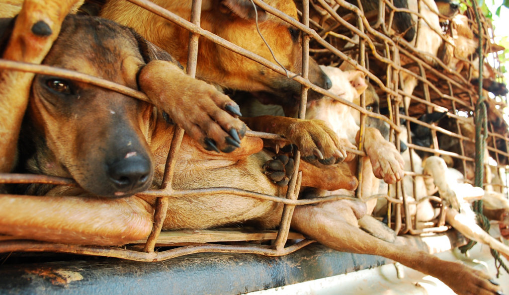 Image result for dog meat