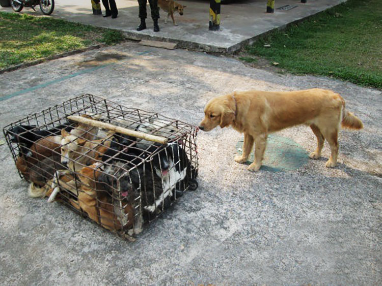 Help dogs rescued from the barbaric dog meat trade