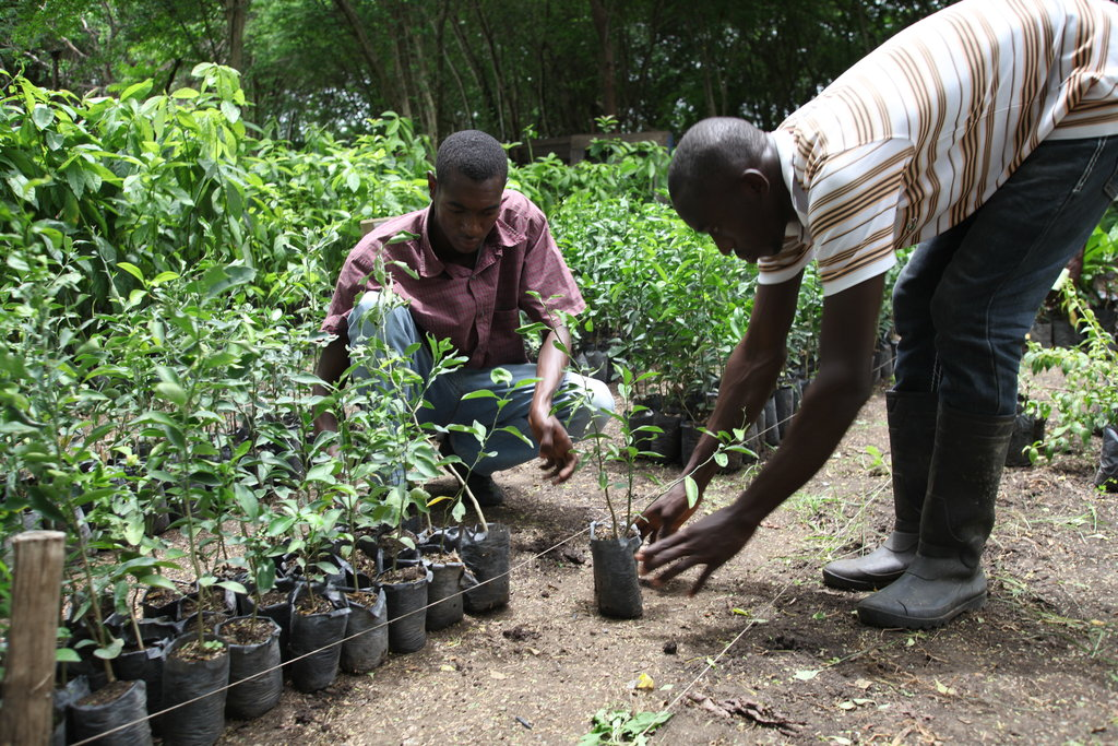 Support Sustainable Agriculture Students in Haiti