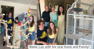 THANKS TO YOU, BABIE LOO FOUND A WONDERFUL FAMILY