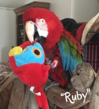 RUBY FOUND A TOY THAT LOOKS JUST LIKE HIM