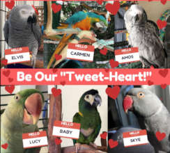 ADOPT ONE OF OUR SWEET TWEET-HEARTS!