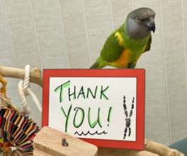 MANGO THANKS YOU FOR ALL HIS DONATED TOYS!