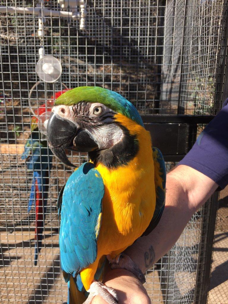 Save Companion Parrots through Rescue & Education