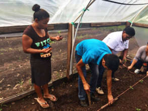 Transplanting tomato plants in Yorito