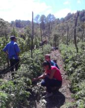 Farmers of Intibuca Sur, identifying diseases.
