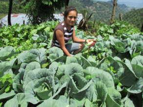 Healthy vegetables on hillsides in Otoro.