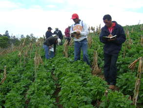 Bean research led by small farmers in honduras.