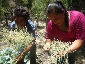 Producing Seeds in Honduras