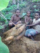 Children help to harvest watur in Tangu.jpg