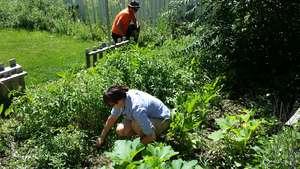Volunteers Helping In a Jovial Garden