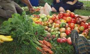 Fresh Produce For All