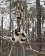Lemurs loving the forest in February