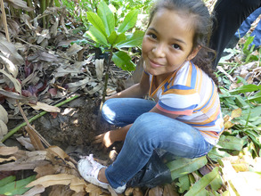 Planting mangroves!