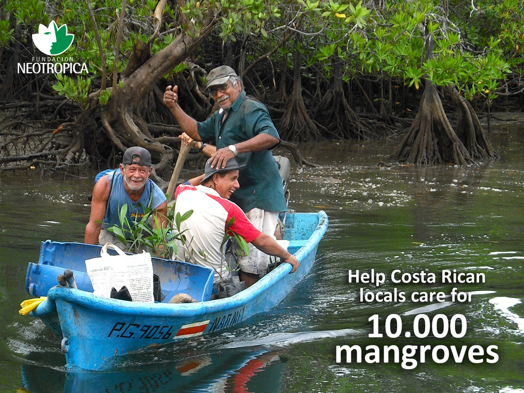 Help Costa Rican locals care for 10.000 mangroves
