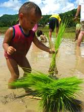 Planting Rice at Whispering Seed