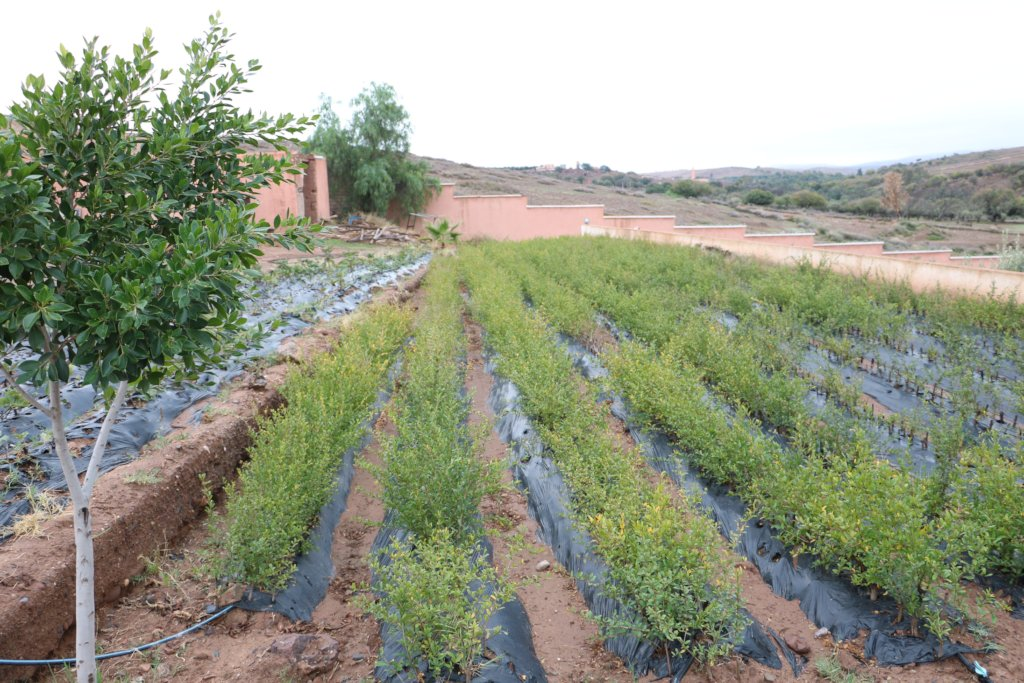 Tree Nurseries to Benefit 10,000 Rural Moroccans