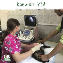 Ultrasound cabinet