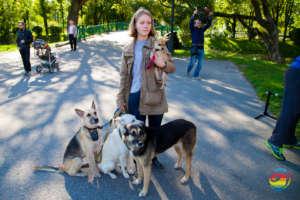 Former shelter pets