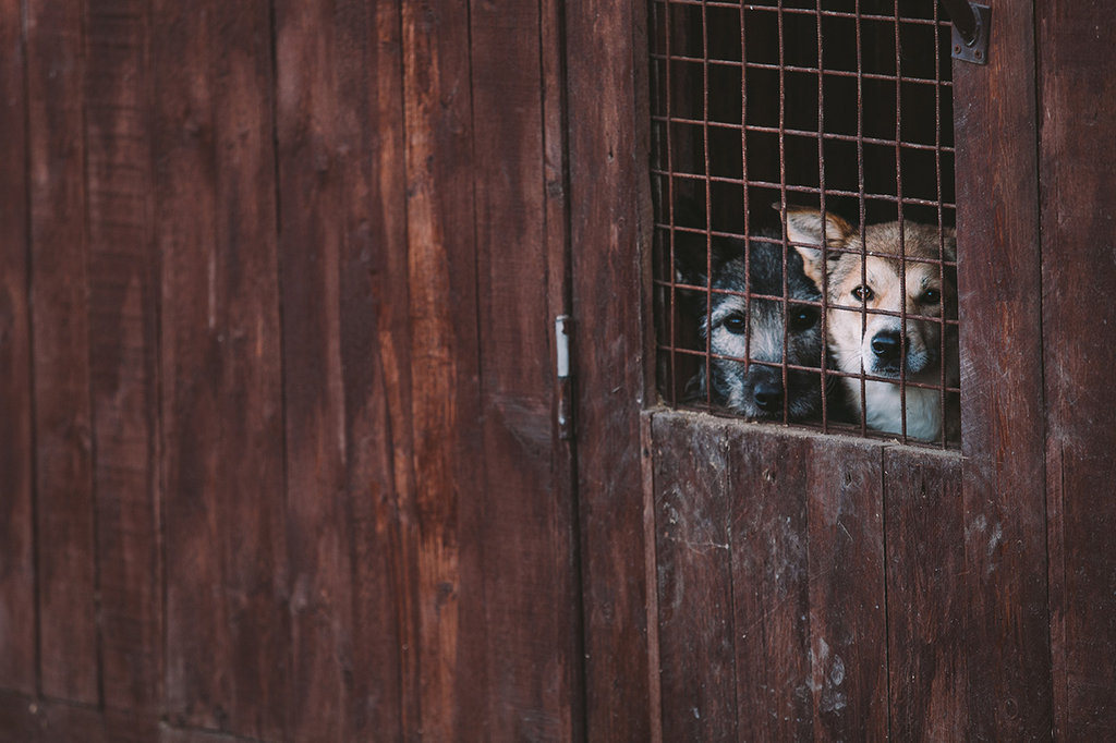 Support abandoned animals in St.Petersburg!