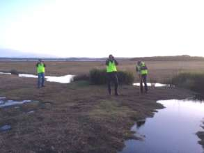 Volunteers looking for mange