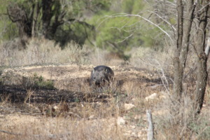 Winter sunshine delights for wombats