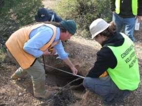 Wombat Warren surveying