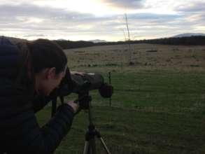 Wombat spotting