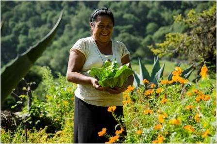 Vegetable gardens in the Sierra Gorda