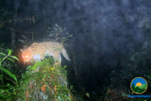 Image captured by our Camera Traps