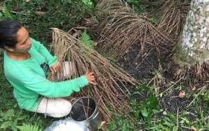 Harvesting at the Reforestation Center