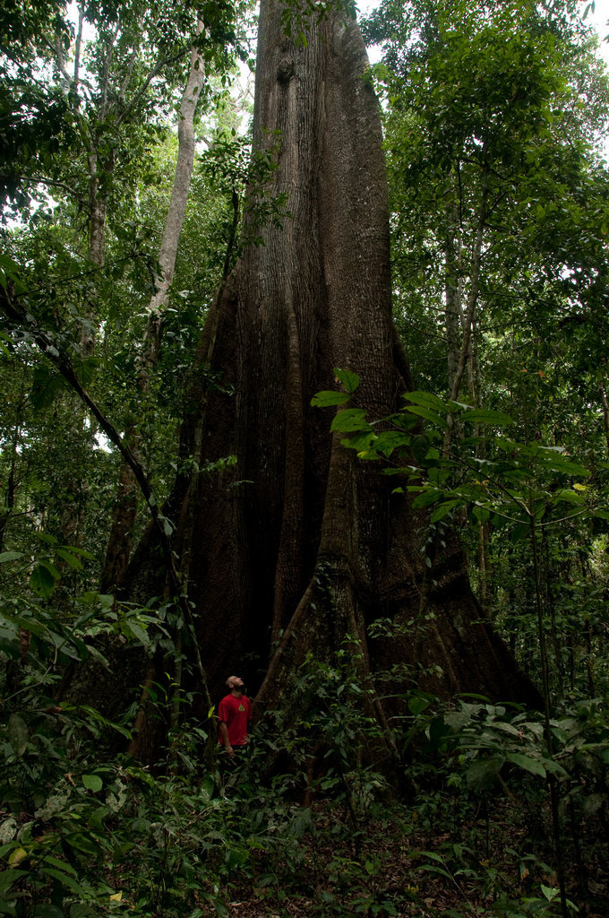 1000 trees a year 1000 acres of rainforest forever