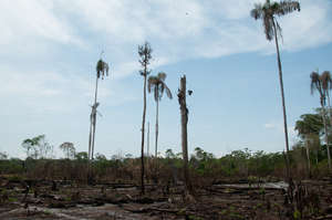Slash and burn deforestation we work to replace
