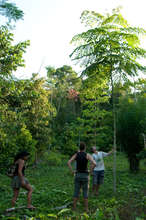 Trees we planted in our Living Seed Bank