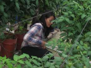 Real life skills through greenhouse production