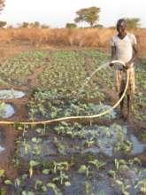 Clean water helps grow healthy food