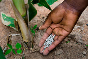 Fertilizer for crops  Alison Wright 2014