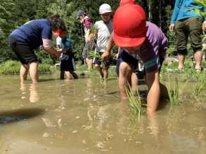 Season for rice planting