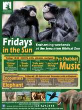 Winter Weekends Program at the Zoo