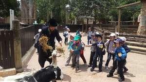 An Ultra Orthodox Jewish school field trip