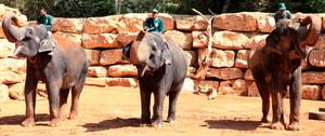 Unbelievable Encounters with Elephants