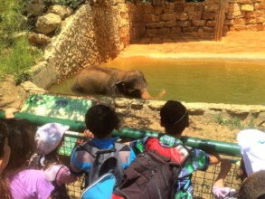 Learning about elephants and the threats they face
