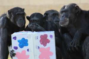 Special Animal Enrichment Activities for Purim