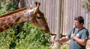 Giraffe feeding demonstration and talk