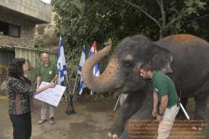 A donation is made to a Thai Elephant Hospital