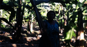 Donna in her newly established banana plantation.